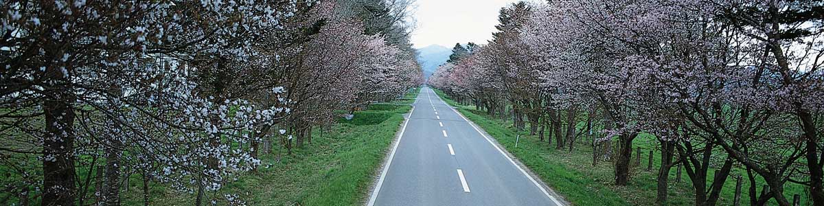 blooming trees down country road