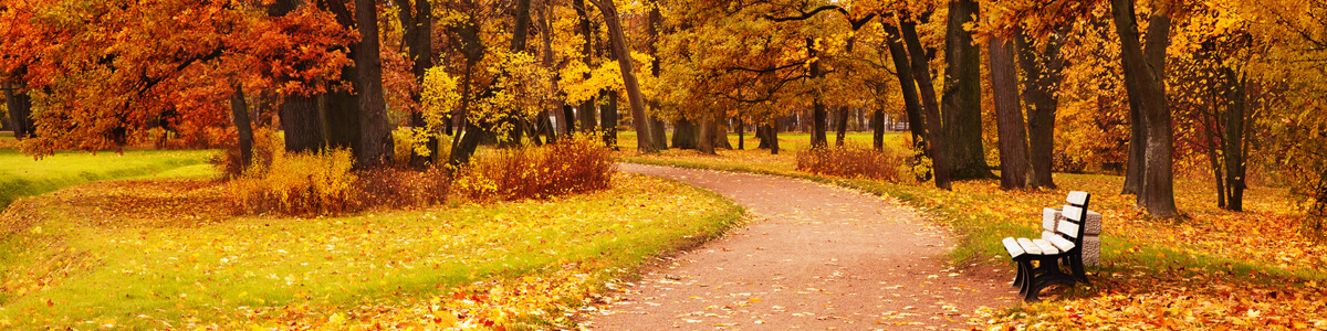Park path in autumn